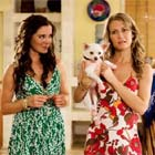 Beverly Hills Chihuahua lidera el box-office