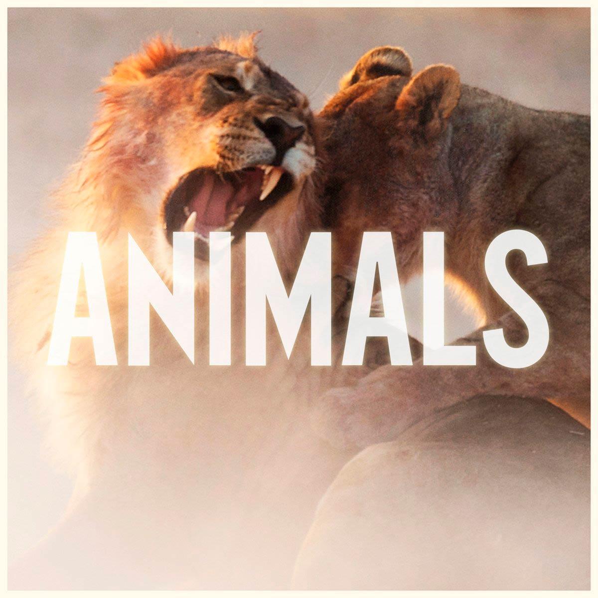 animals de maroon 5 portada 3 de 5 anterior siguienteMaroon 5 Animals Album Cover
